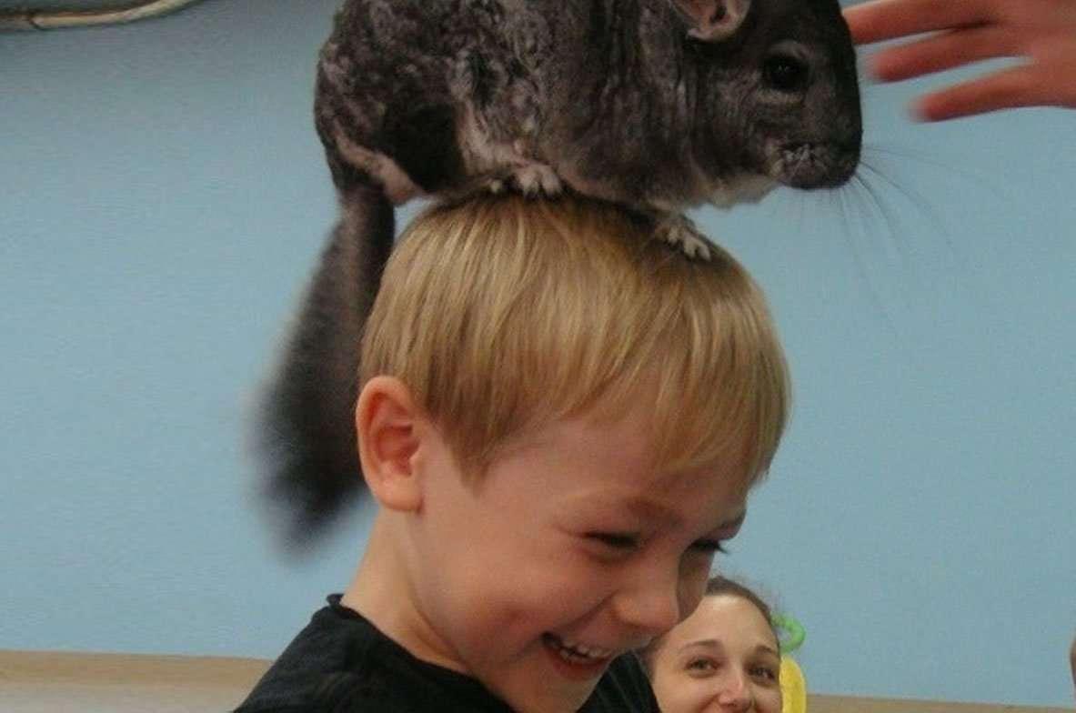 Toronto daycare animals